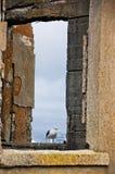 海鸥在具体窗口里 免版税图库摄影