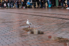 海鸥在城市 图库摄影