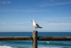 海鸥在木篱芭栖息反对海景 库存图片