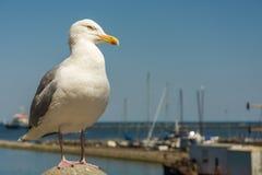 海鸥在海的海岸的阳光下 免版税库存照片