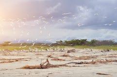 海鸥在海滩飞行 库存图片