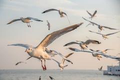 海鸥在海 免版税库存图片