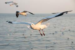 海鸥在海 库存照片