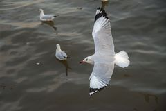海鸥在海 免版税库存照片