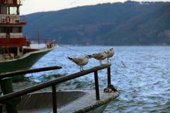 海鸥在港口 免版税库存照片