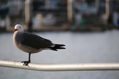 海鸥在港口 图库摄影