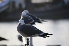 海鸥在港口 库存照片
