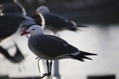 海鸥在港口 库存图片