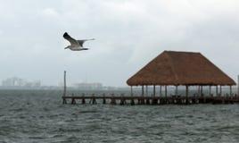 海鸥在飞行中在坎昆的海湾华雷斯港 免版税图库摄影