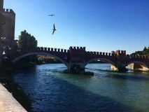 海鸥在维罗纳 免版税库存照片