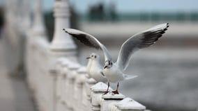 海鸥在Donostia 免版税库存图片