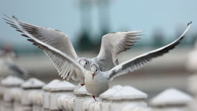 海鸥在Donostia 库存照片