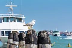 海鸥坐一个港口在威尼斯,意大利 库存照片