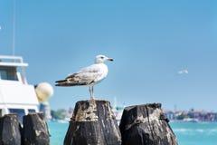 海鸥坐一个港口在威尼斯,意大利 免版税库存图片