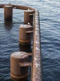 海鸥坐一个生锈的管子在水中 免版税库存图片