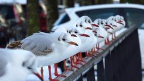 海鸥坐一座桥梁在住宅区在冬天期间 库存图片