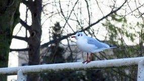 海鸥坐一座积雪的桥梁在冬天期间 免版税库存照片