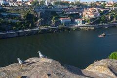 海鸥坐在杜罗河河,波尔图,葡萄牙上的岩石 自然 免版税库存图片
