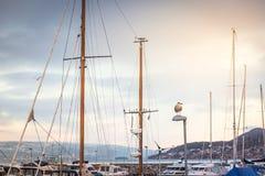 海鸥坐在航行游艇的帆柱背景的一盏街灯  免版税库存照片