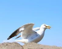 海鸥坐岩石 库存照片