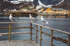 海鸥坐木扶手栏杆反对山背景,湖并且钓鱼房子 库存图片