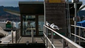海鸥坐栏杆由Zurich湖 免版税图库摄影