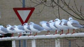 海鸥坐桥梁在路附近在冬天期间 免版税库存照片