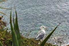海鸥坐海的背景的一家高银行 免版税库存图片