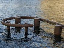 海鸥坐生锈的管子 免版税库存照片