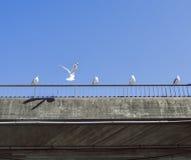 海鸥坐用栏杆围一个美好的夏日的一座具体桥梁 库存图片