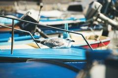 海鸥坐蓝色小船sundeck在皮兰小游艇船坞 免版税图库摄影