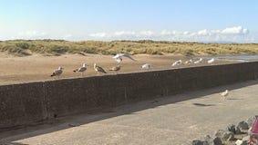 海鸥墙壁  免版税图库摄影