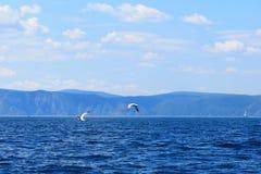 海鸥大小组群在海湖水和飞行的在夏天日落的天空 免版税库存图片