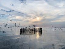 海鸥天空和海背景 免版税库存照片