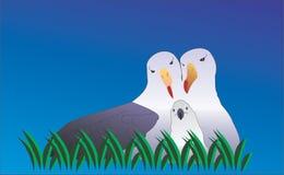 海鸥家庭 库存照片
