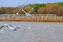 海鸥居住很多海 免版税图库摄影