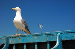 海鸥想知道 库存照片