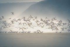 海鸥有薄雾的海洋 库存图片