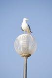 海鸥栖息灯被设置反对明亮的蓝天 免版税图库摄影