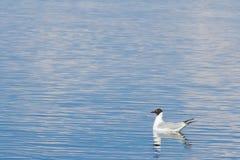 海鸥游泳在水中 大海通知 背景彩色插图模式无缝的向量水 免版税库存图片