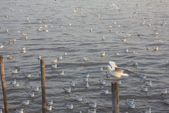 海鸥特写镜头 免版税库存图片