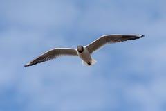 海鸥的纵向 免版税库存图片