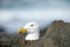 海鸥的纵向 库存图片
