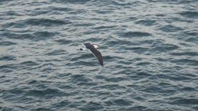 海鸥的飞行 影视素材