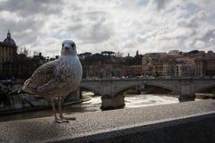 海鸥石桥梁壁架罗马意大利台伯河梵蒂冈旅行 库存图片