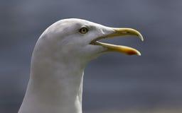 海鸥纵向 免版税图库摄影