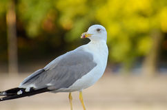 海鸥纵向 免版税库存图片