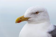 海鸥纵向 库存图片