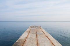 海鸥群在码头边缘的 免版税库存图片