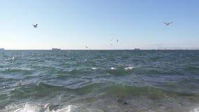 海鸥群盘旋在海滨缓慢的mo 股票录像